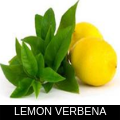 LEMON VERBENA.png