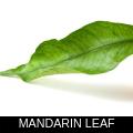MANDARIN LEAF.png