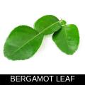 BERGAMOT LEAF.png