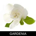 GARDENIA.png