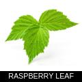 RASPBERRY LEAF.png