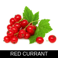 RED CURRANT.png