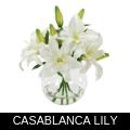 CASABLANCA LILY.png