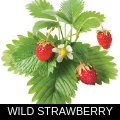 WILD STRAWBERRY.png