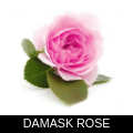 DAMASK ROSE.png