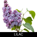 LILAC.png