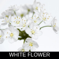 WHITE FLOWER.png
