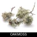 OAKMOSS.png