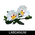 LABDANUM.png
