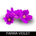 PARMA VIOLET.png
