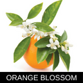 ORANGE BLOSSOM.png