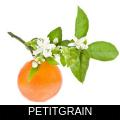 PETITGRAIN.png