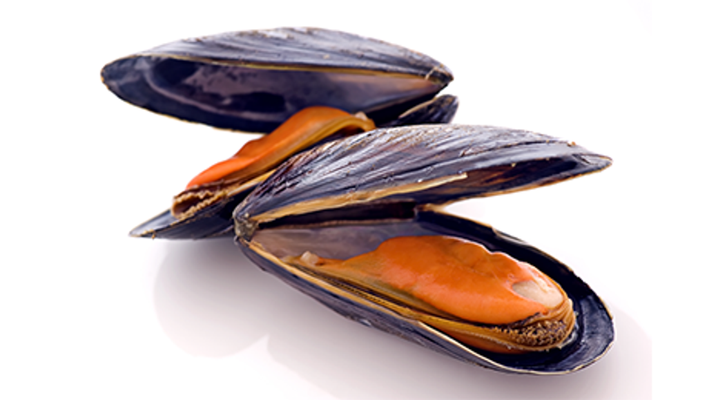 black mussel.png