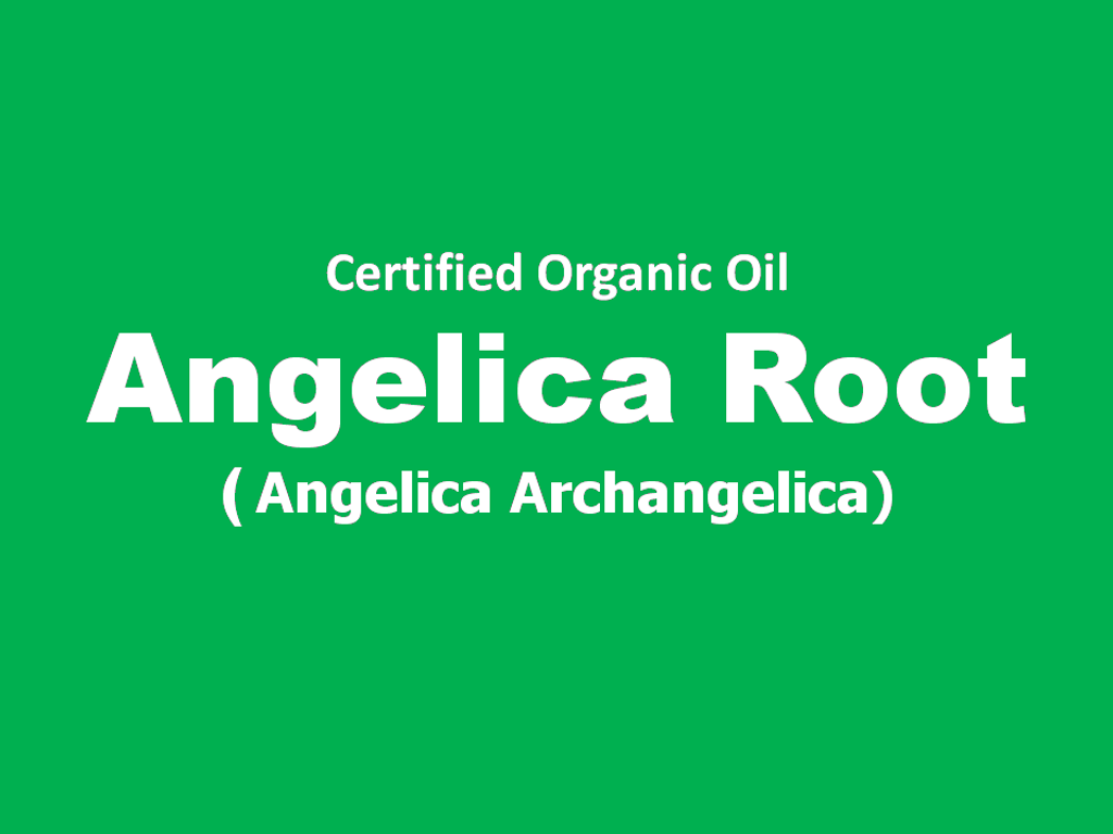 angelica root.png