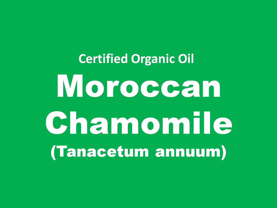 moroccan chamomile.PNG