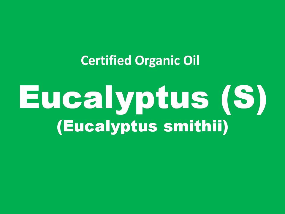 eucalyptus (s).PNG