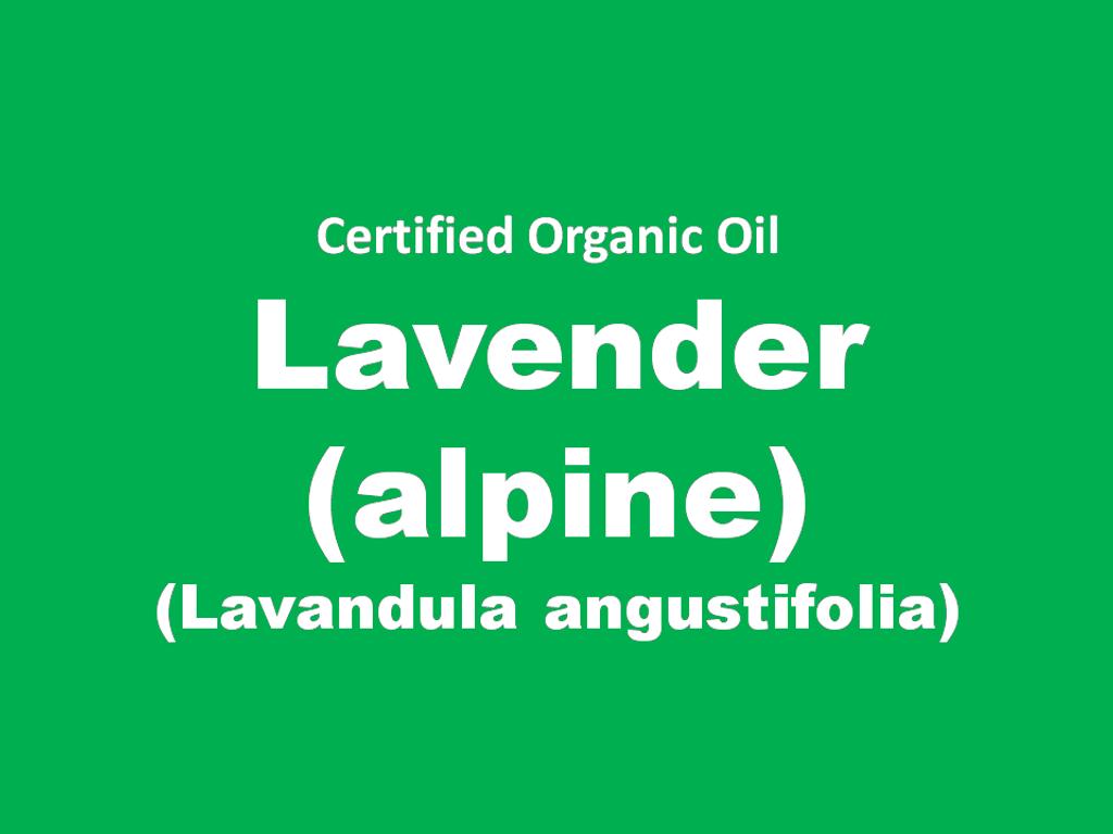 lavender alpine.PNG