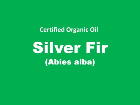 silver fir.PNG
