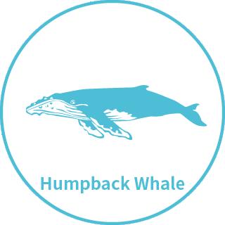 分類-大翅鯨.png