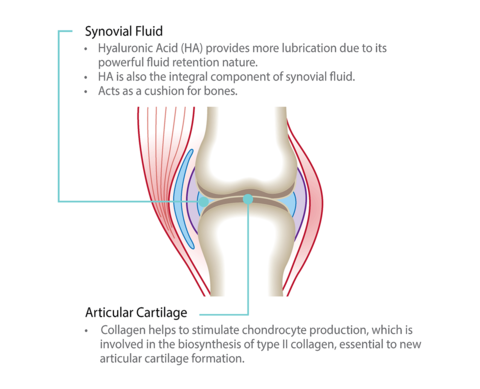 Collagen-Joints-Health.png