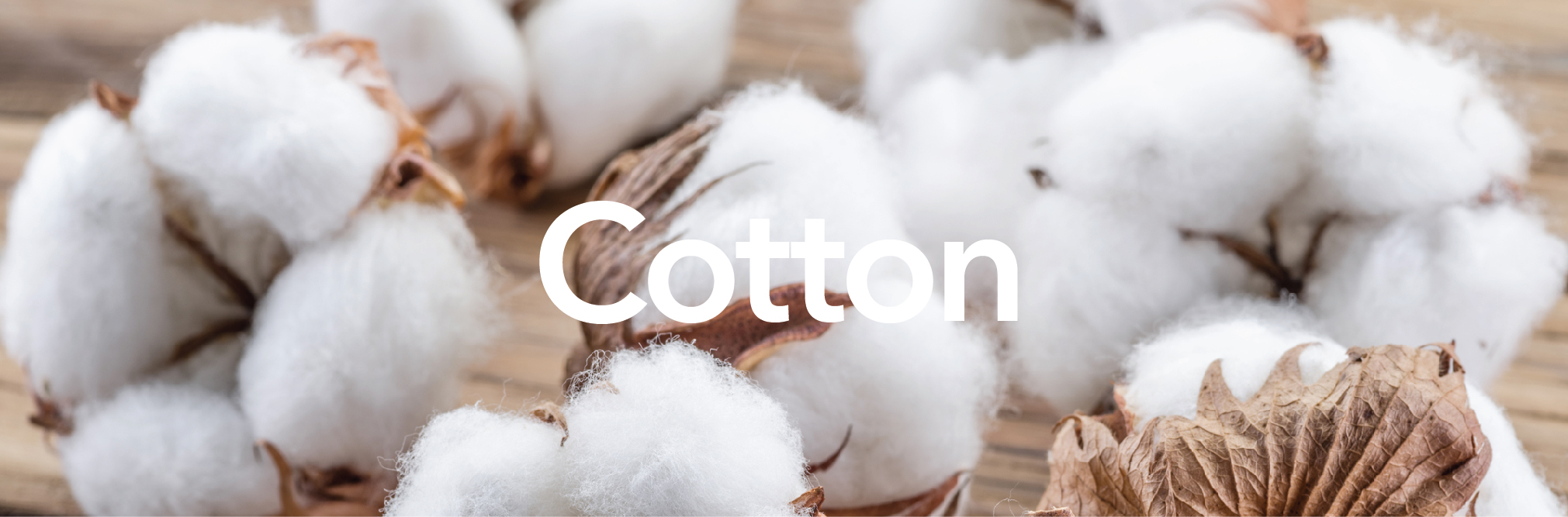 Cotton-main-01.jpg