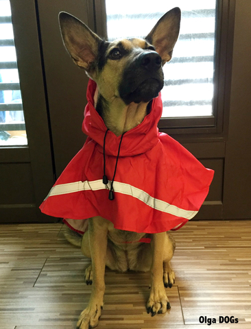 raincoat_red_1.jpg