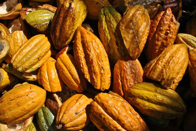 Cacao fruit. The beans inside of the fruit are used to make cocoa--the key ingredient in chocolate bars.