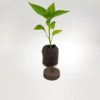 Jiffy Pellet & Jiffy with Chilli Seedling 1.jpg