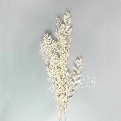 小樺木白-1.jpg