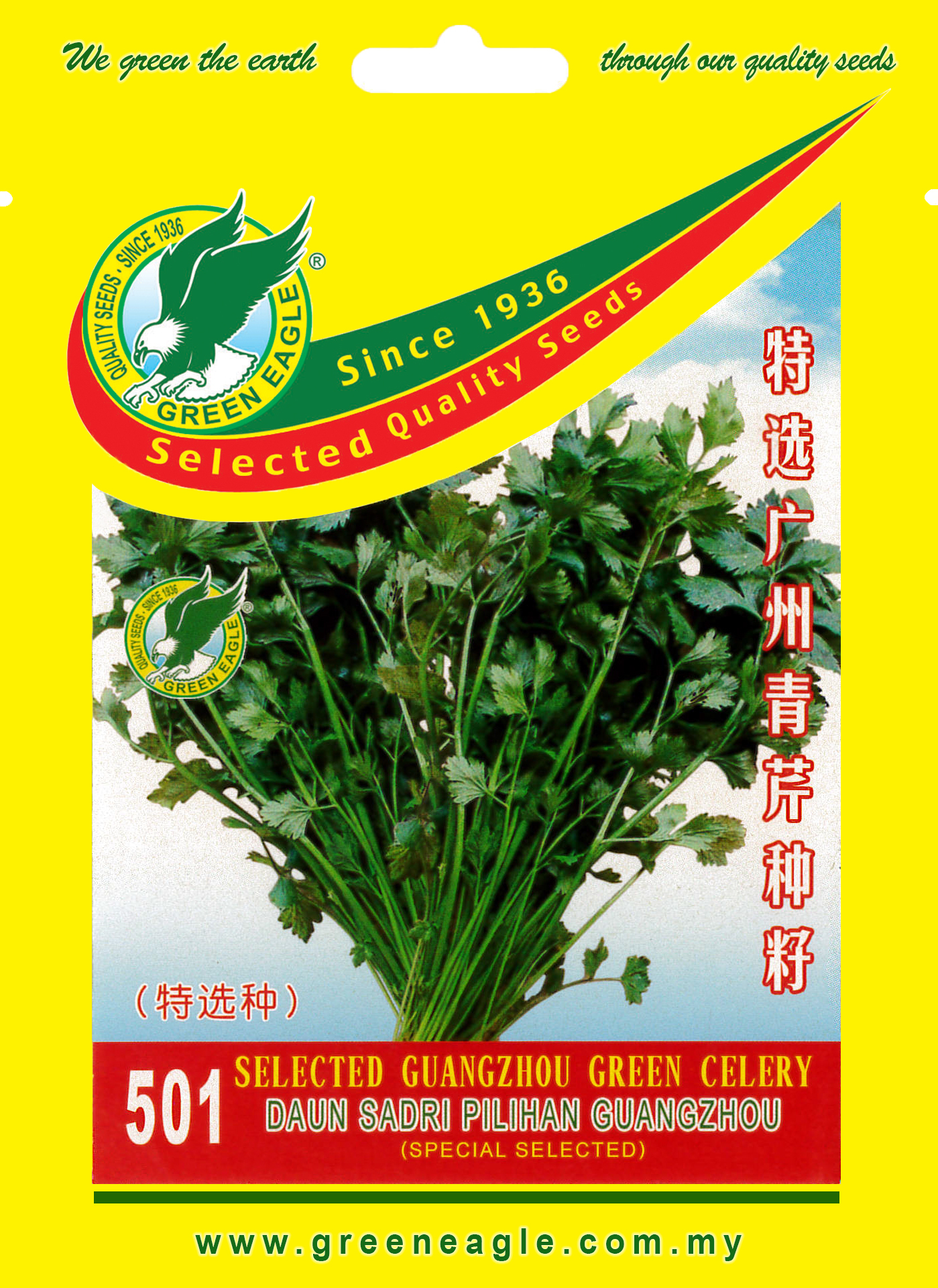 501-Selected-Guangzhou-Green-Celery.jpg