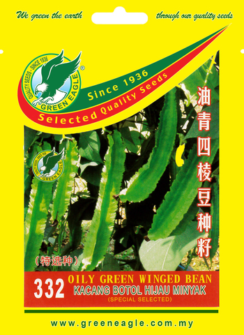 332-Oily-Green-WInged-Bean-1.jpg