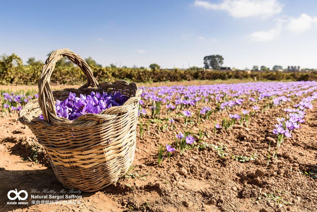 路德貝納 西紅花Sargol Saffron  (3).jpg