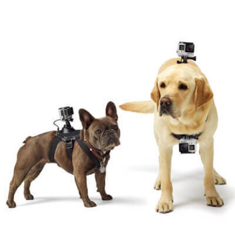 GoPro – Fetch (Dog Harness) 3.jpg