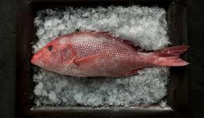 Red Snapper.jpeg