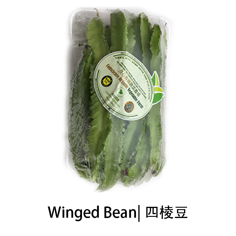 Winged Bean.jpg