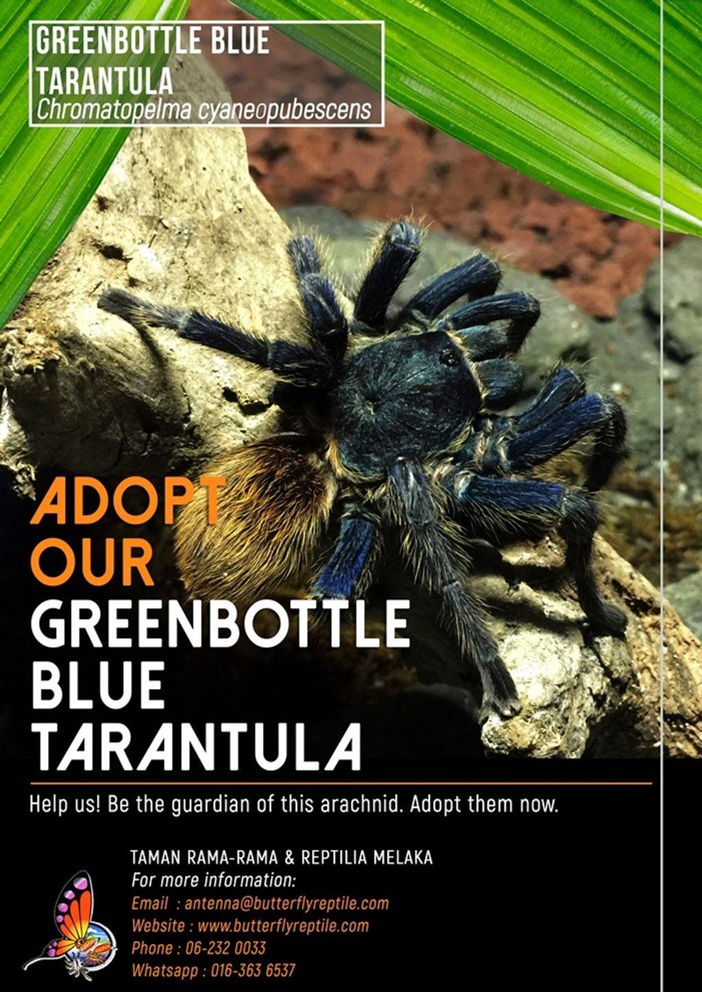 Tarantula i.jpg
