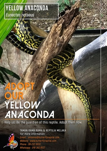 Yellow Anaconda i.jpg