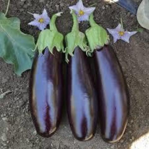 400 seeds purple eggplant.jpg
