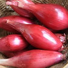2000 green round eggplant.jpg