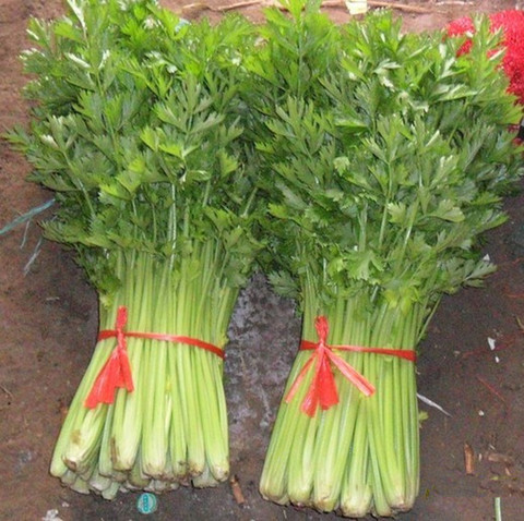 2016-Garden-celery-Seeds-Vegetables-15g-bag-Thailand-small-celery-home-garden-Plant-seeds.jpg