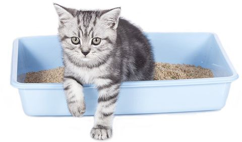 best-litter-for-your-cat.jpg