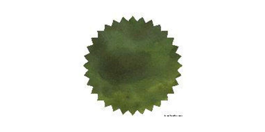 Eucalyptus Leaf 02.JPG
