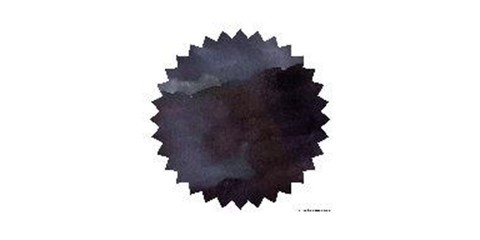 Black Violet.JPG