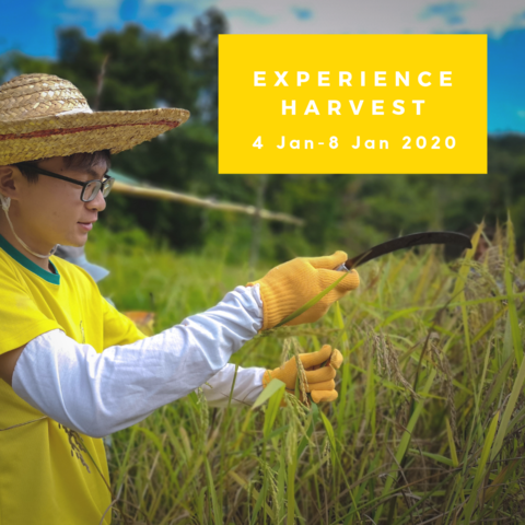 langit-experience-harvest-2.png