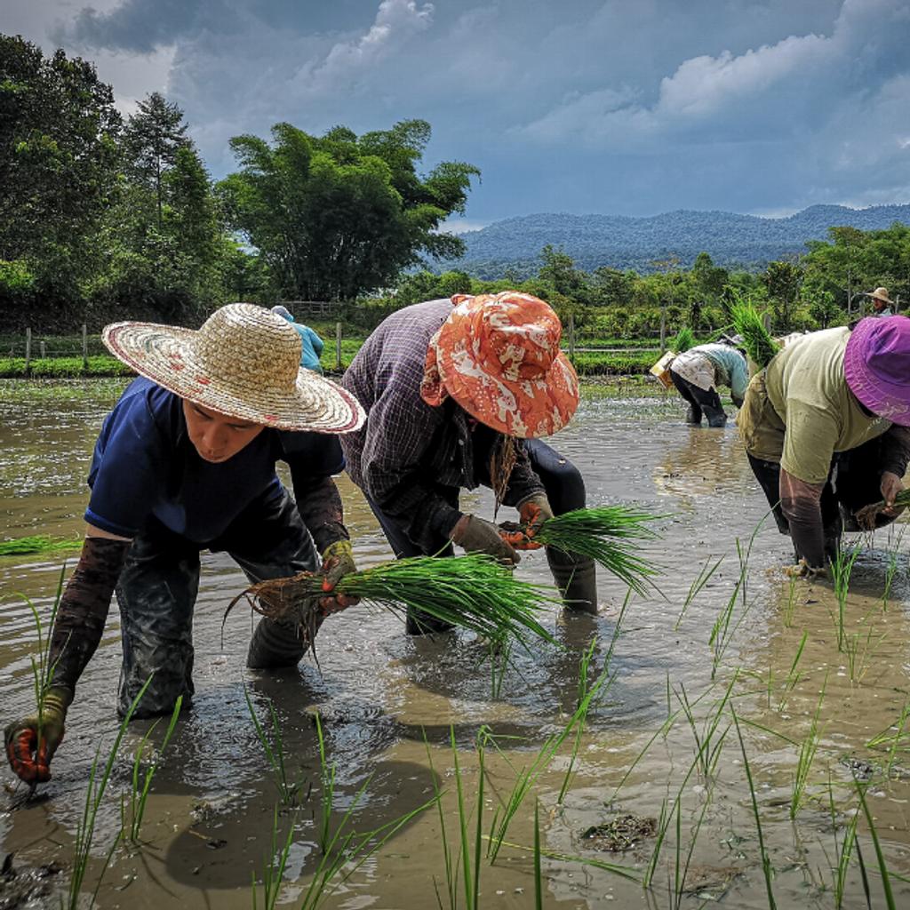 langit-rice-farmers.png