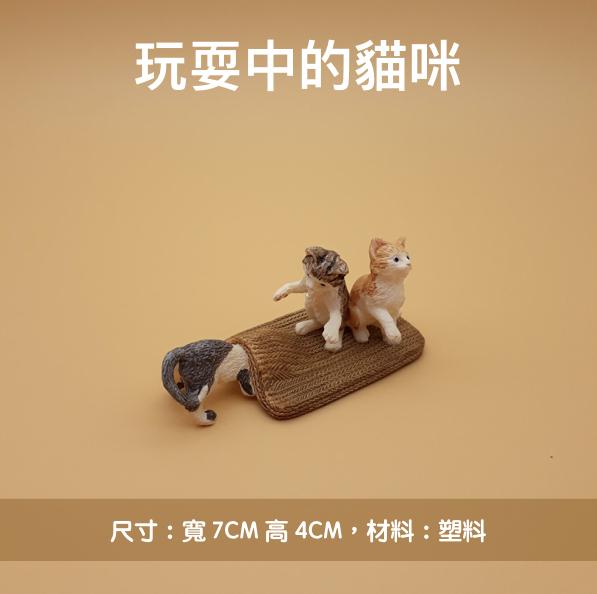玩耍中的貓咪-1.jpg