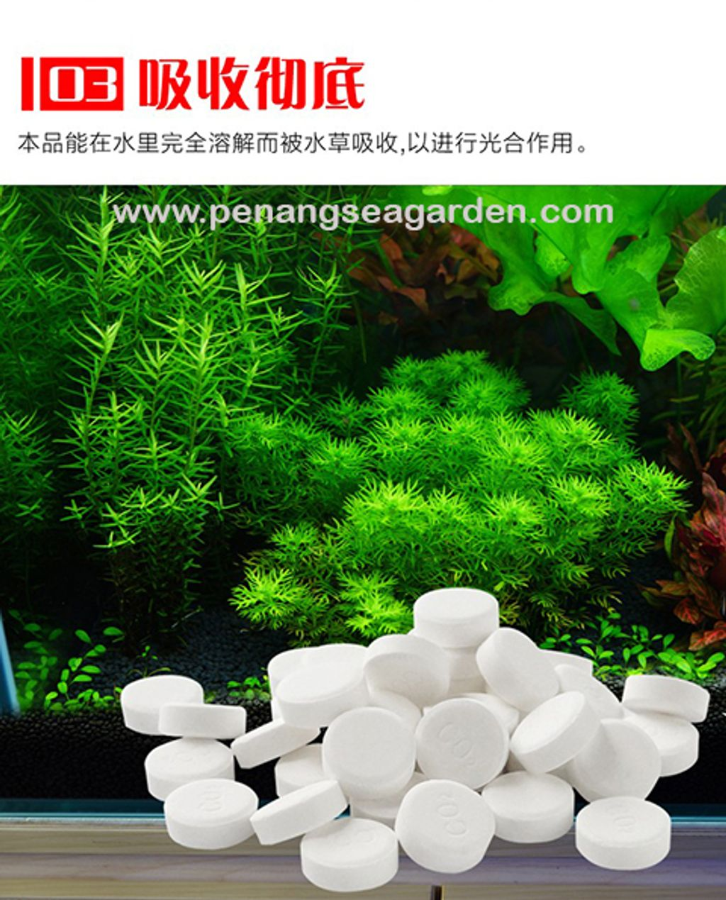ISTA Water Plant CO2 水草 (100 Tablet) RM23-7.3w.jpg