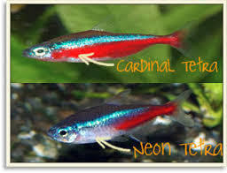 Cardinal & Neon - Web1.jpg