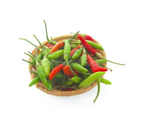 chilli-padi-bird-s-eye-thai-pepper-146056130.jpg