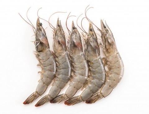 fresh-shrimp-prawn_1339-2185.jpg